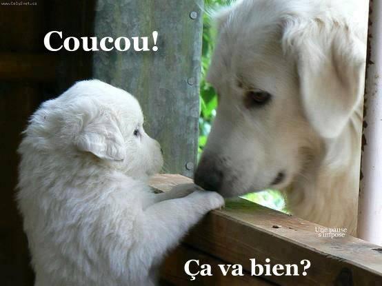 Bonjour / bonsoir avril - Page 3 Coucou10