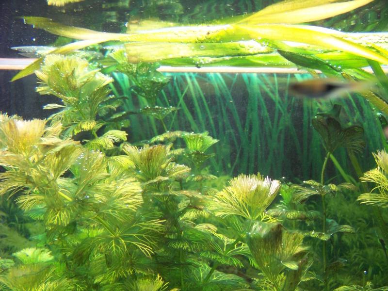 Algues Photo_10