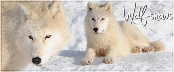 Wolf Snows Lalala10