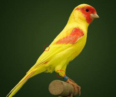 Nouveau : lipo jaune mosaîque rouge 28280610