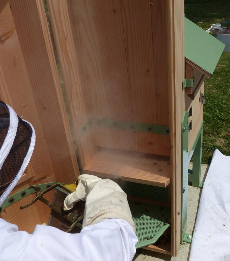 VISITE 1 et VISITE 2 de la ruche samedi 5 et 12 mai 2018 à 14h P1060311