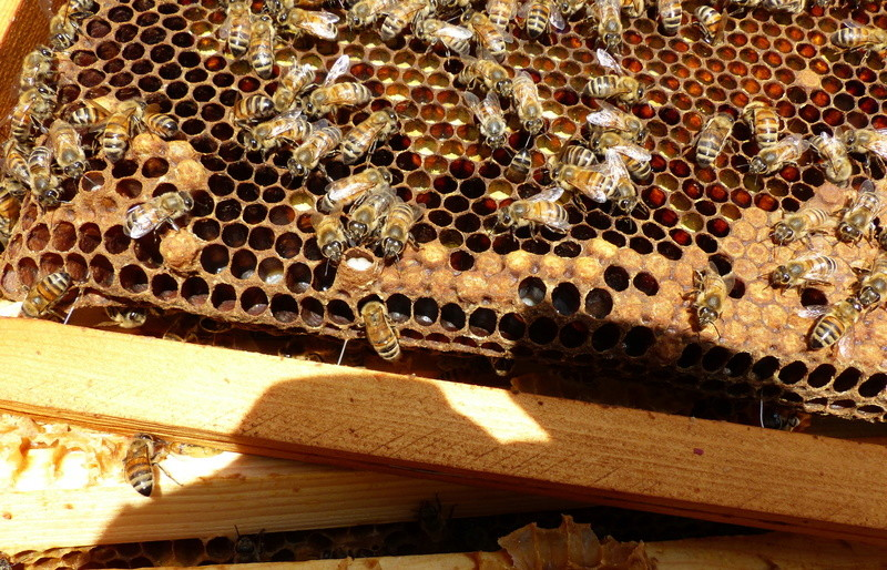 VISITE 1 et VISITE 2 de la ruche samedi 5 et 12 mai 2018 à 14h P1060312
