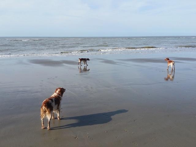 Vacances en baie de somme  Cayeux10