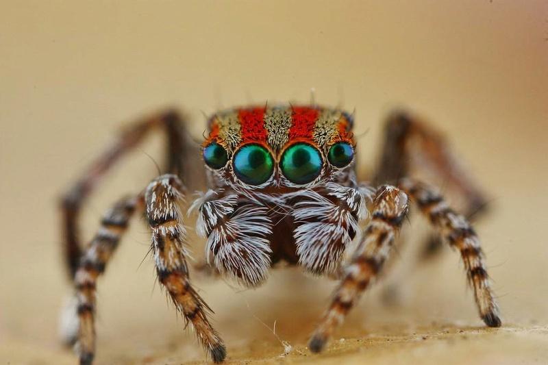 Un truc que je voulais faire en voyant une .... Spider10