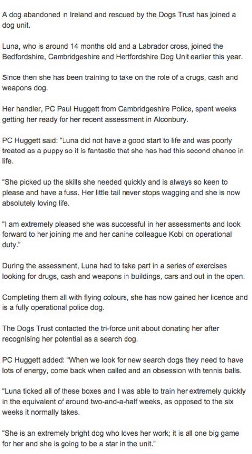 Those incredibly 'unreliable' DOGS............again! - Page 6 Dogs10
