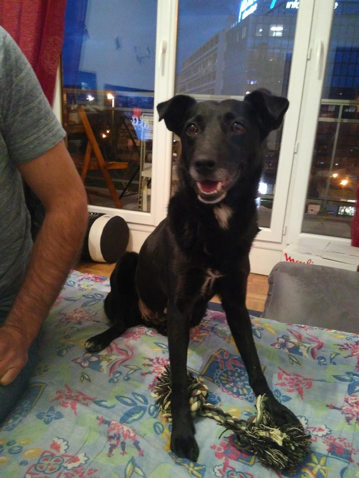 Miracle ADOPTEE 29426010