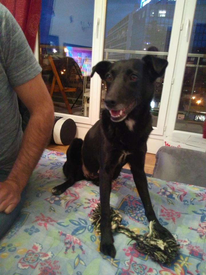 Miracle ADOPTEE 29432910