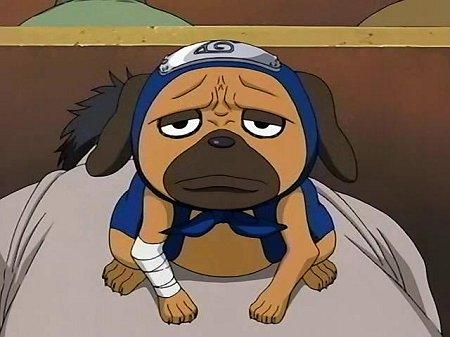 Naruto : la présentation des personnages - Page 5 Pakkun11