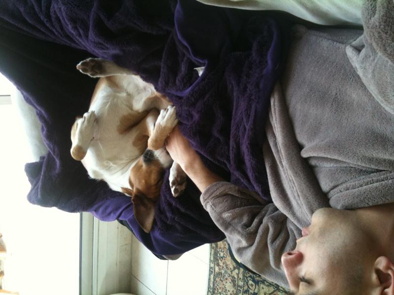 Les moments de complicité avec vos chiens  Forum_11