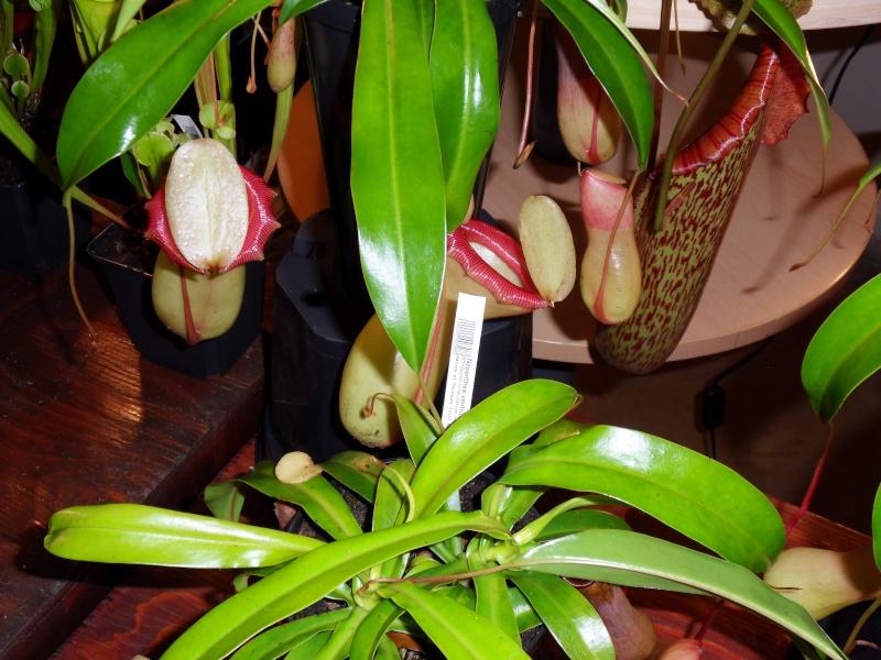 Petites photos de l'expo de plantes à Lyon Sdc11319
