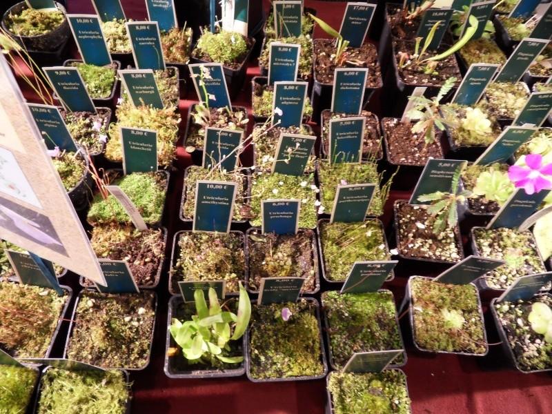 Petites photos de l'expo de plantes à Lyon Sdc11321