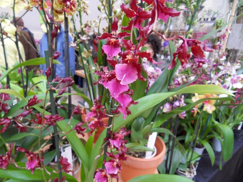 Petites photos de l'expo de plantes à Lyon Sdc11322