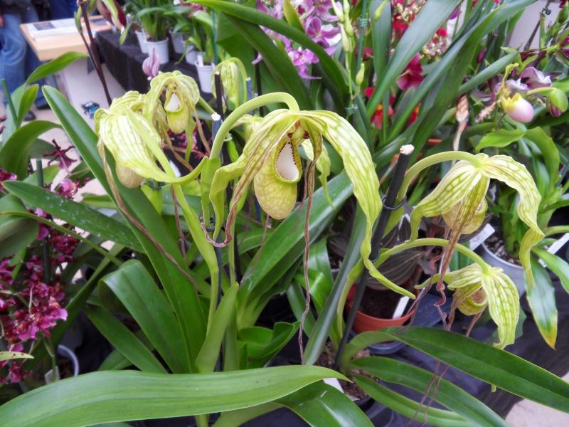 Petites photos de l'expo de plantes à Lyon Sdc11323
