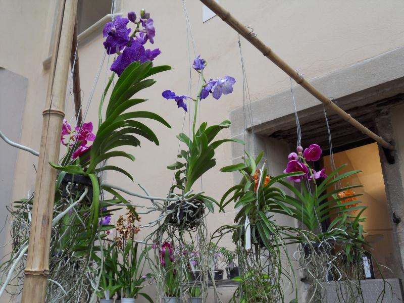 Petites photos de l'expo de plantes à Lyon Sdc11325