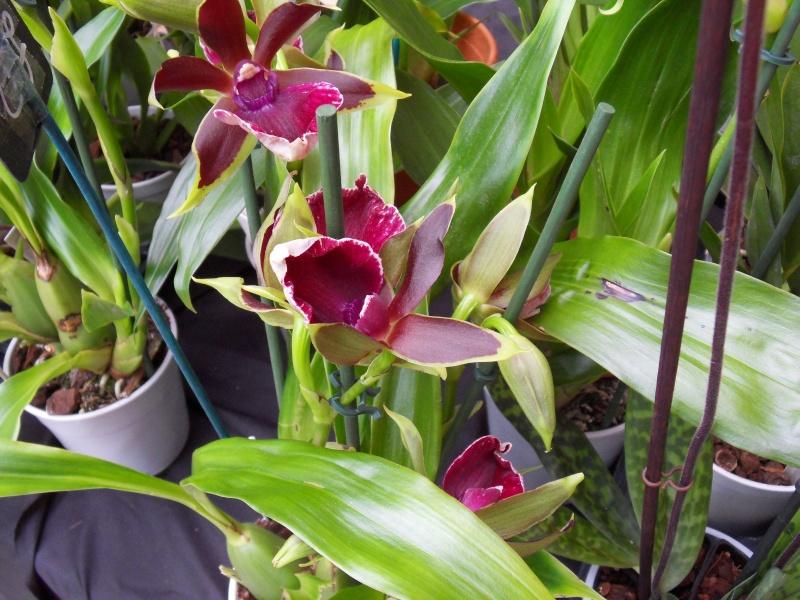 Petites photos de l'expo de plantes à Lyon Sdc11326