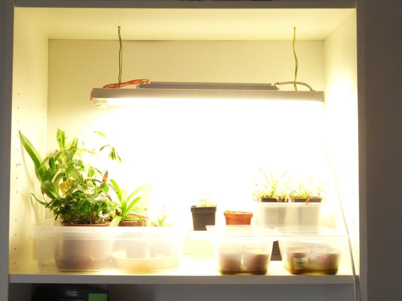 - Eclairage pour culture indoor - Page 3 Sdc12821