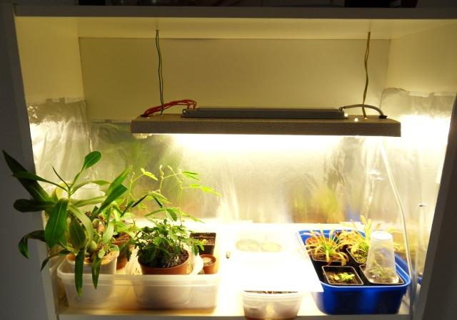 Projet terrarium dans une étagère Sdc12940