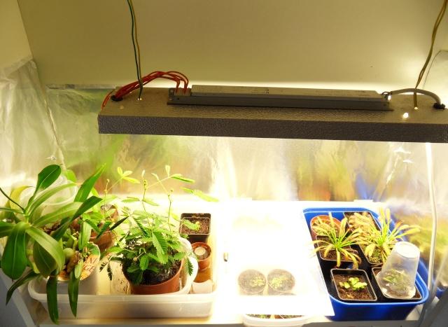 Projet terrarium dans une étagère Sdc12941