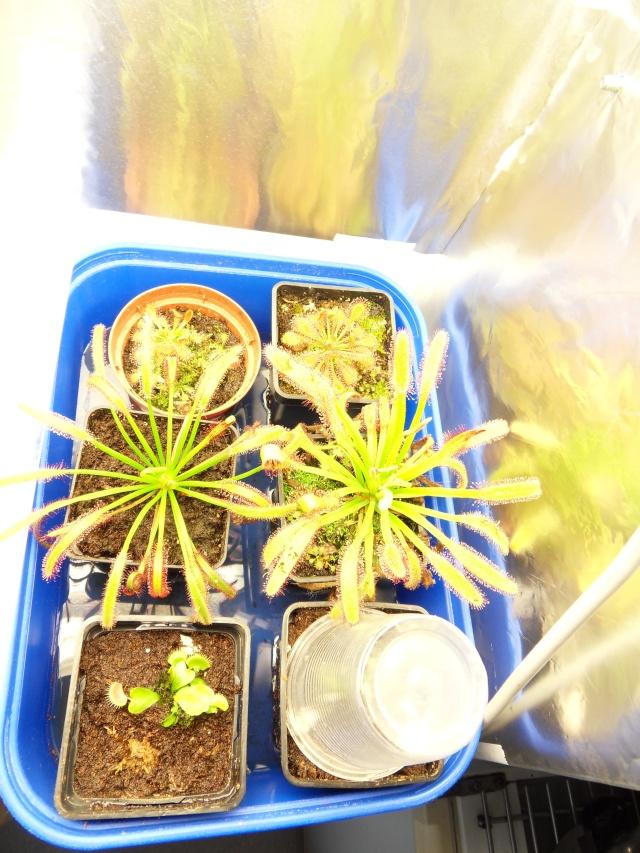 Projet terrarium dans une étagère Sdc12942