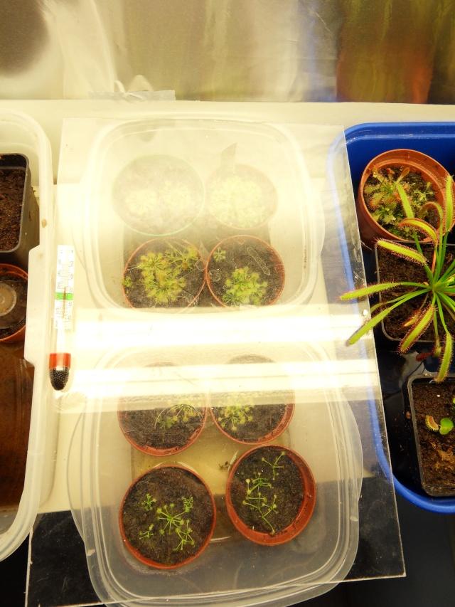 Projet terrarium dans une étagère Sdc12943