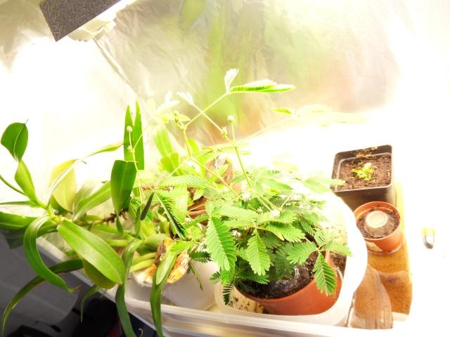 Projet terrarium dans une étagère Sdc12944