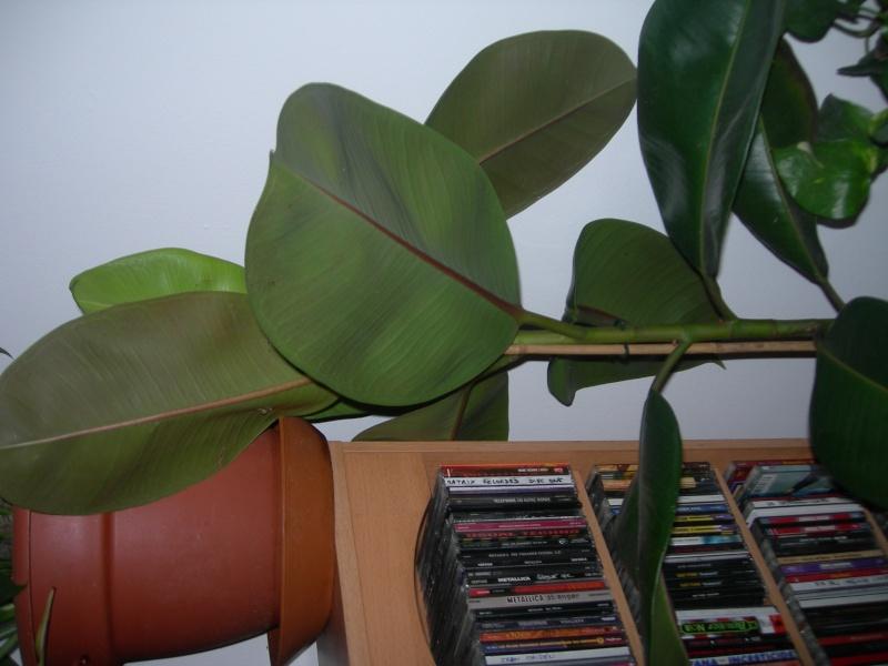 pouvez vous identifiez ses deux plantes vertes Photos10