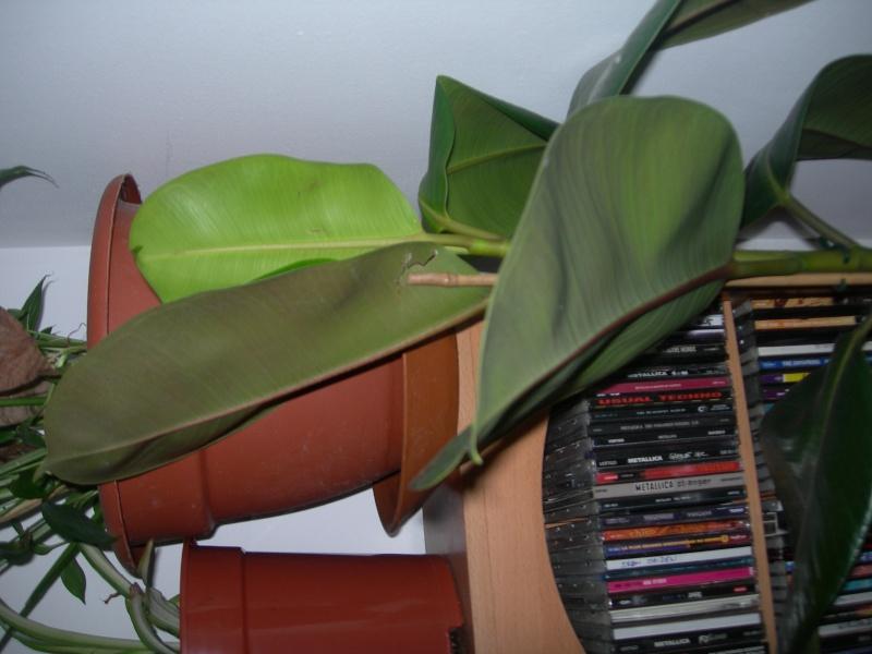 pouvez vous identifiez ses deux plantes vertes Photos11