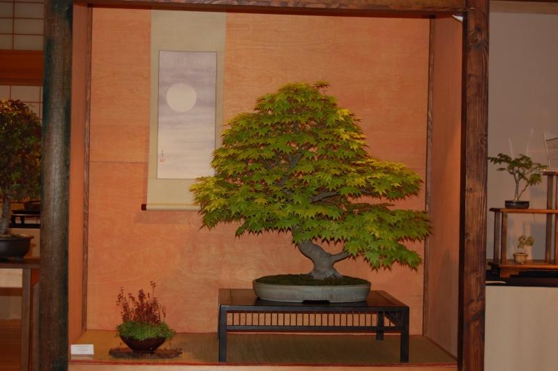 Bonsai Society of Portland Spring Show Spring14