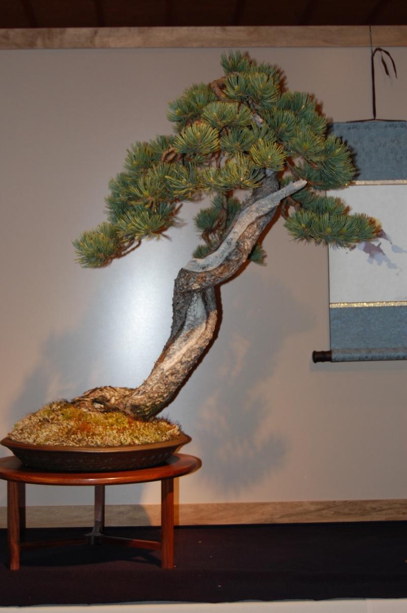 Bonsai Society of Portland Spring Show Spring16
