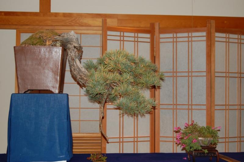 Bonsai Society of Portland Spring Show Spring17