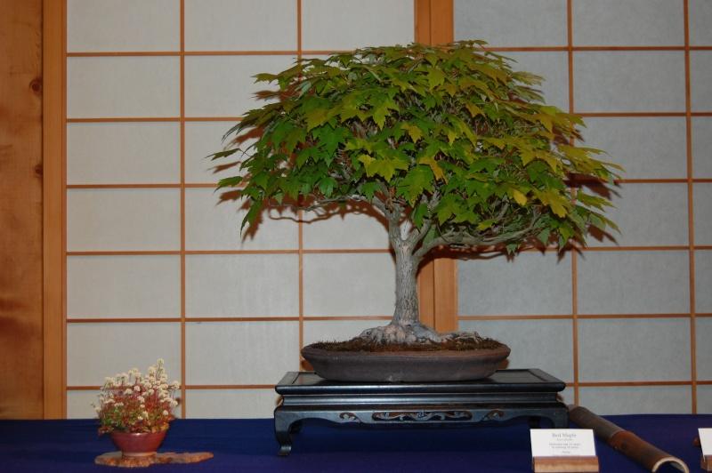 Bonsai Society of Portland Spring Show Spring18