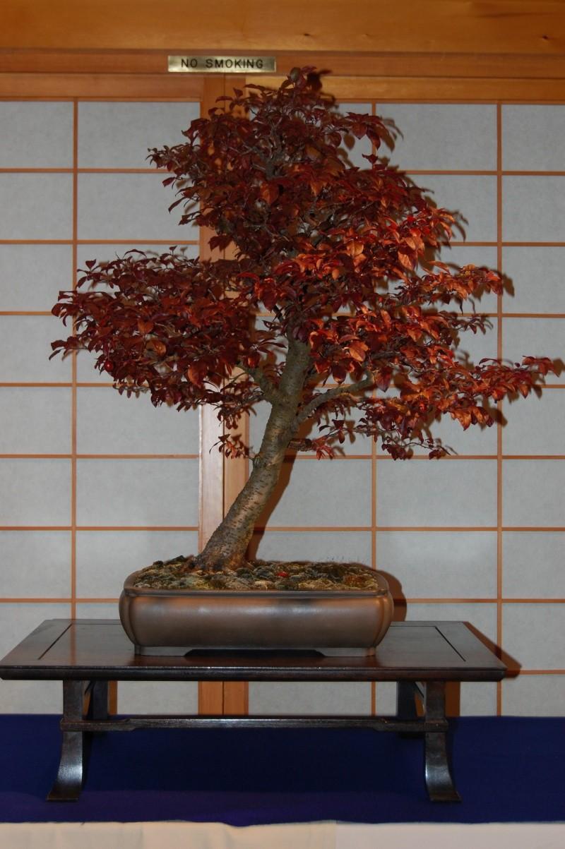 Bonsai Society of Portland Spring Show Spring22
