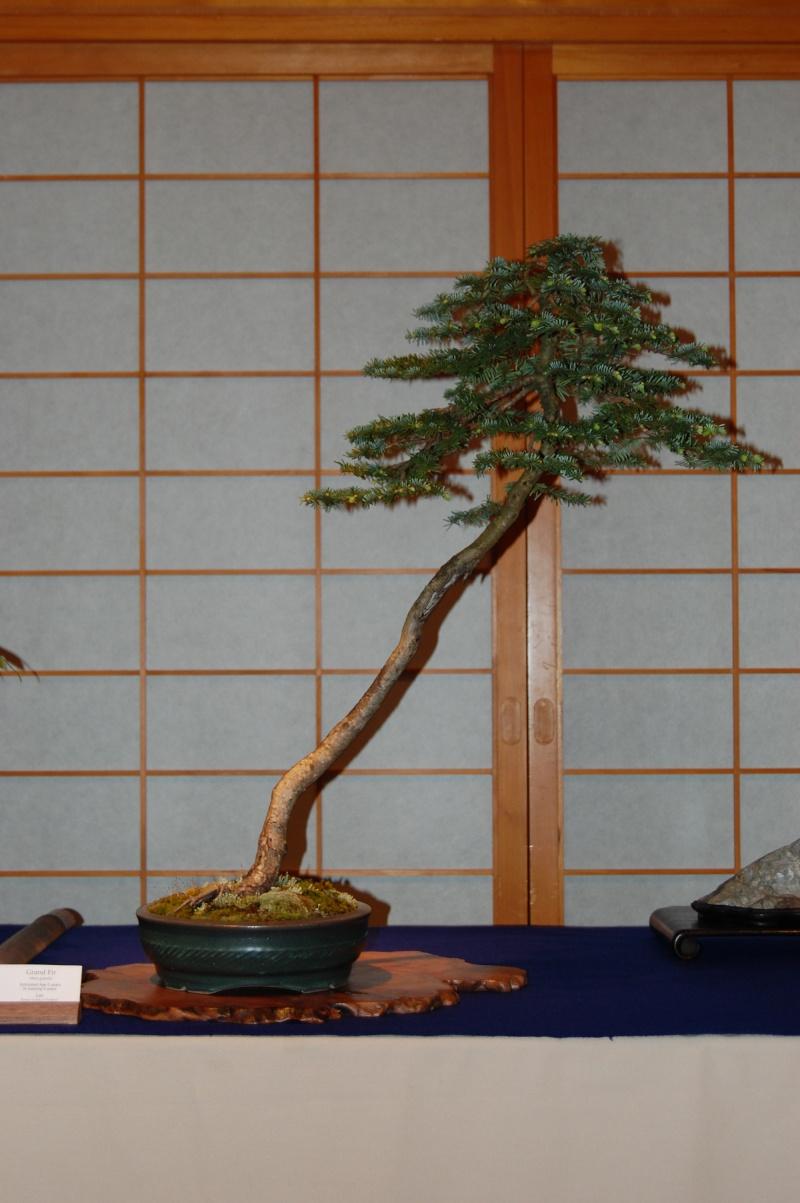 Bonsai Society of Portland Spring Show Spring23
