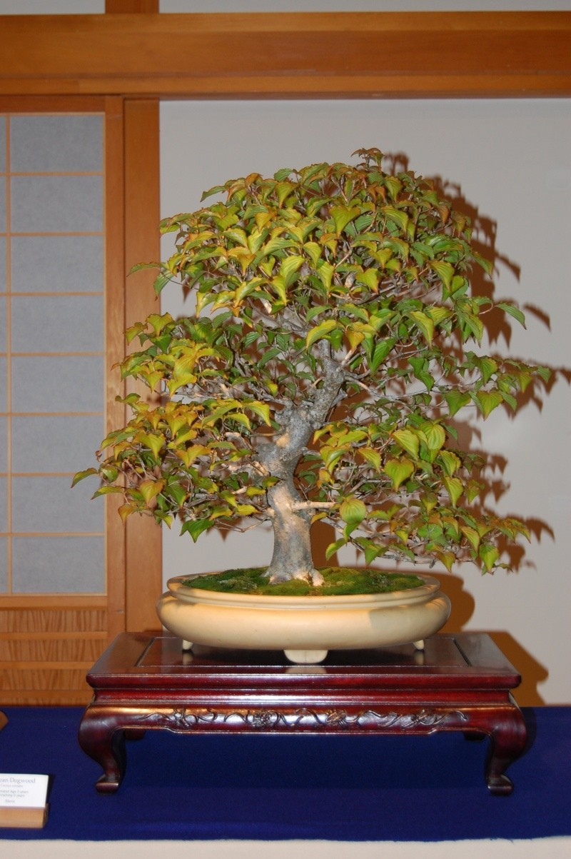 Bonsai Society of Portland Spring Show Spring24