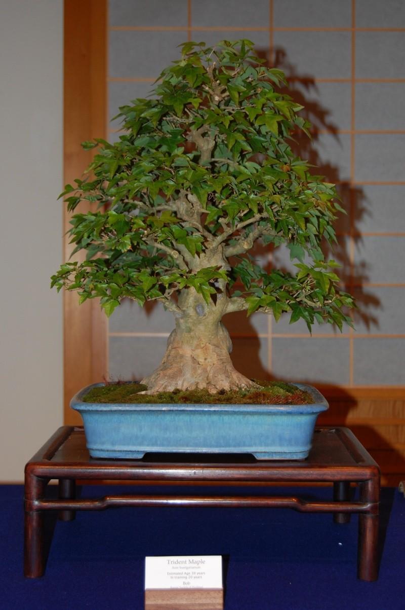 Bonsai Society of Portland Spring Show Spring26