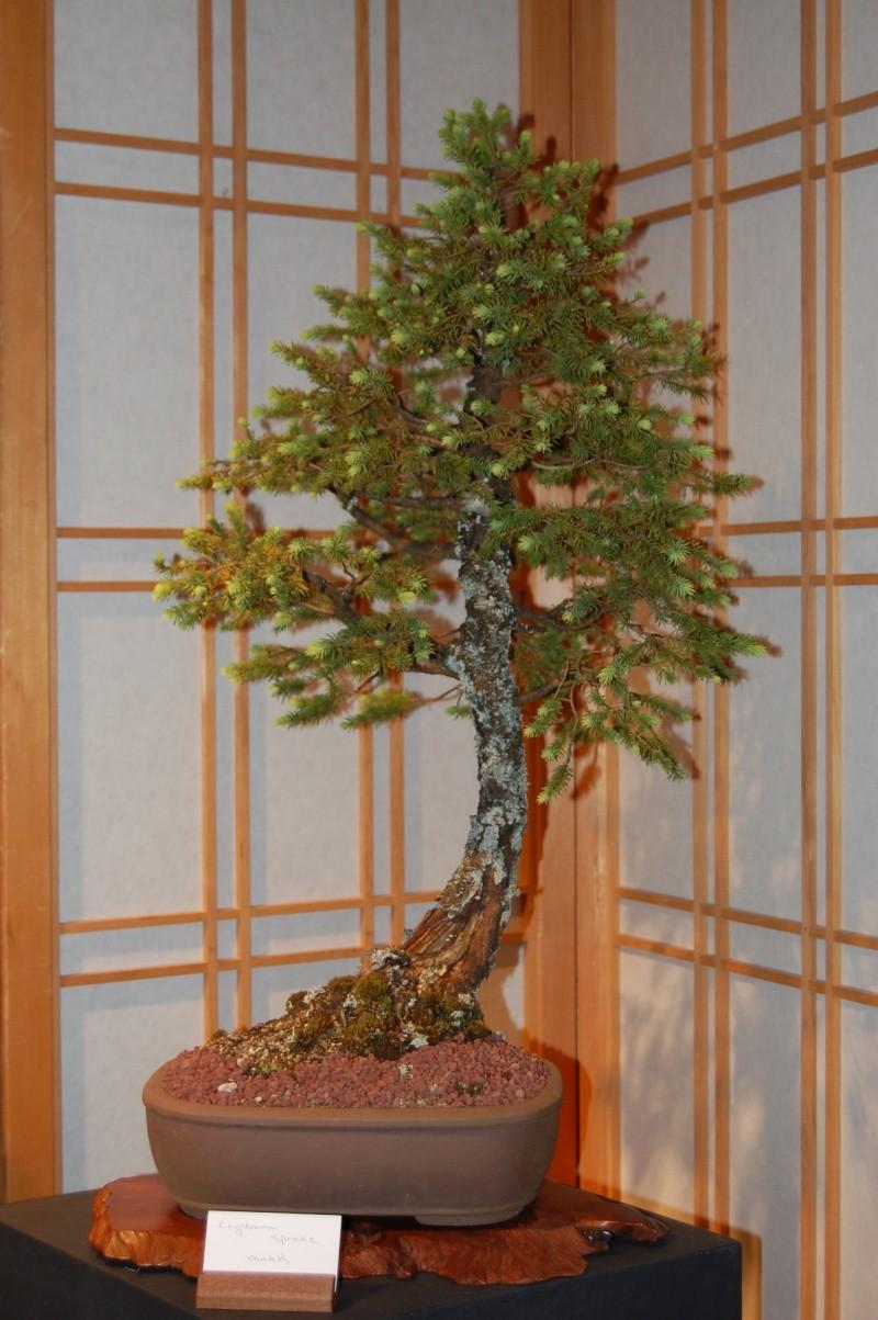 Bonsai Society of Portland Spring Show Spring29