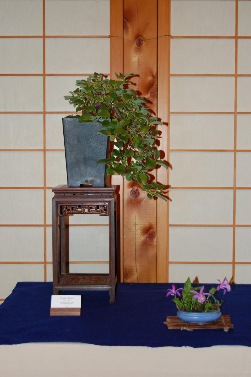 Bonsai Society of Portland Spring Show Spring33