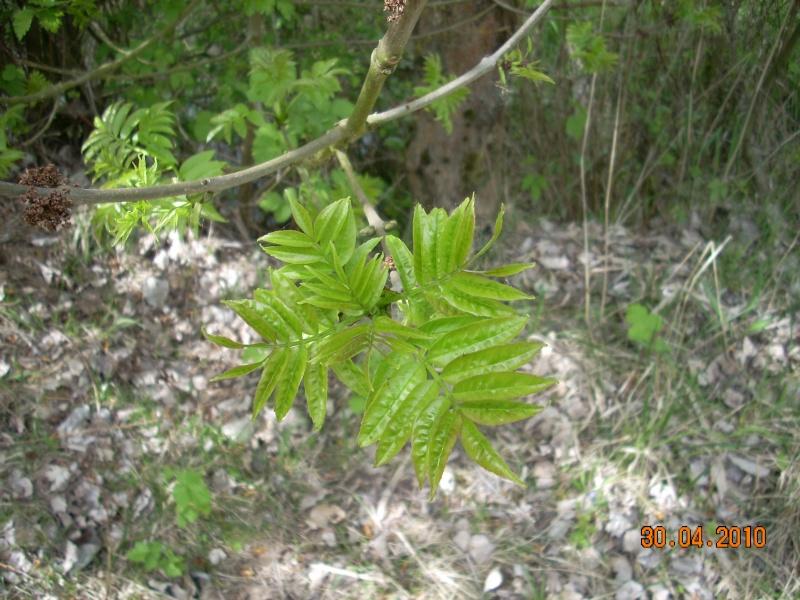 Quel sera cet arbre? - Page 2 04_00410