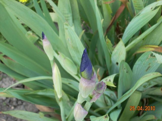 Le printemps a commencé!!!!!!!!!!!! - Page 37 21_01810