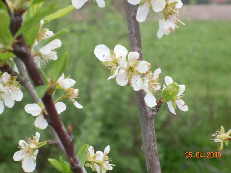 qui pourais me dire de qu'elle appartient cette fleur 21_02210