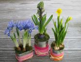 jardiniere en boite de conserve B-bulb10