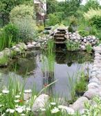 Plantes aquatiques et bassins Bassin13
