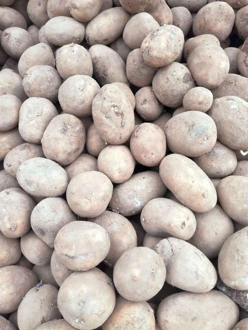 conserver pomme de terre dans ensilage d'Herbe Img_2014