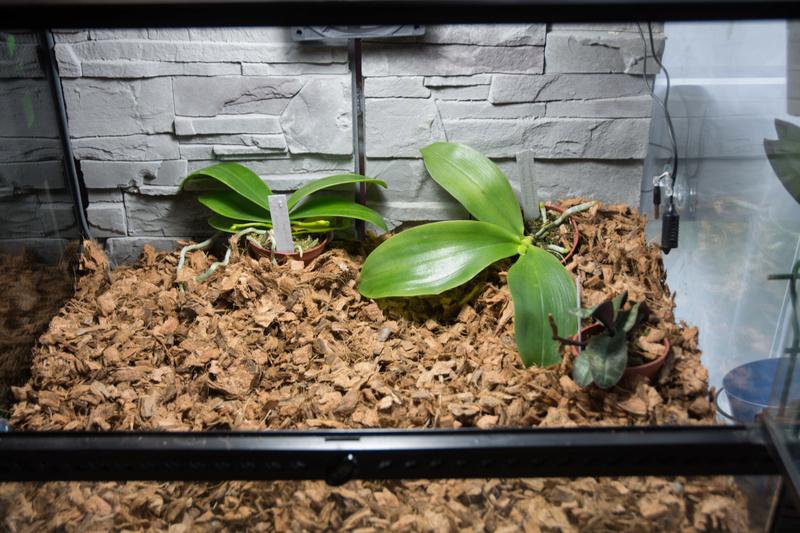 orchidarium Dsc_0710