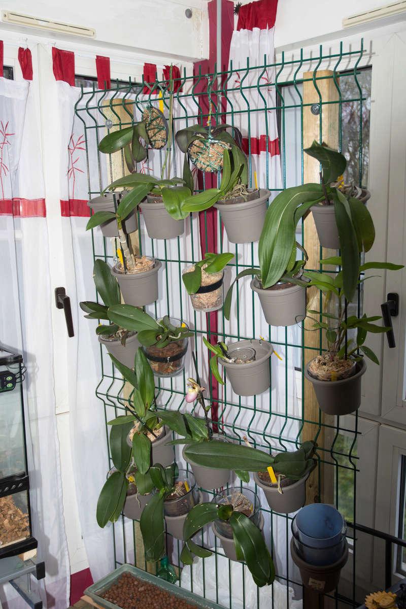 orchidarium Dsc_0810