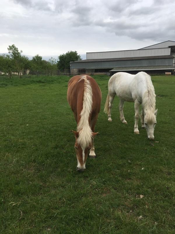 ISA ESPERANCE - poney Haflinger née en 1996 - adoptée en juillet 2017 par sonia et Olivier Img_7610