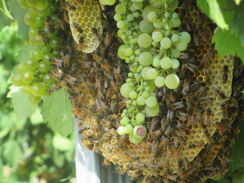 La production de miel français à l'arrêt Img_0610