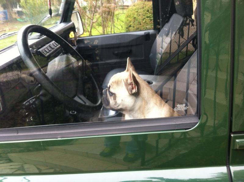Des connaisseurs en chiens ?  - Page 6 Photo_21