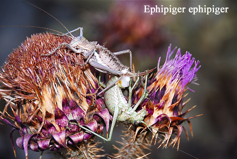 Photos Grece Ephipp10