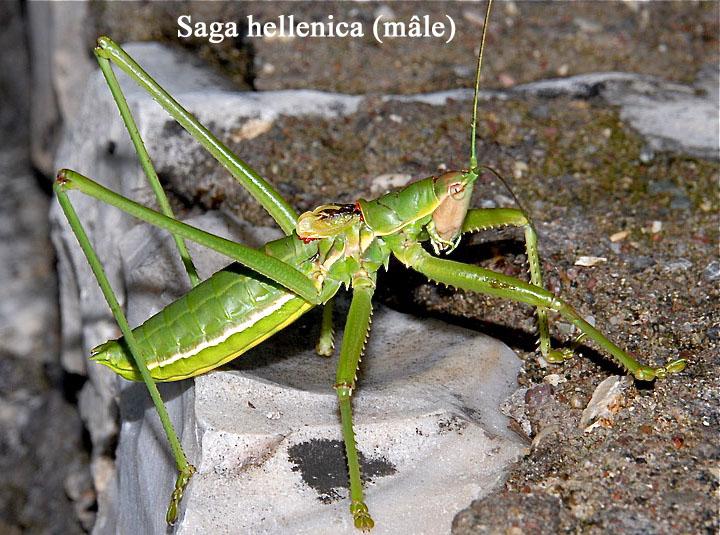 Photos Grece Saga_h11